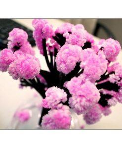 Árbol Mágico Sakura ya Florecido