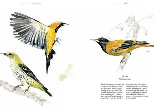 Aves libro VIDA. Bestiario ilustrado por Joana Santamans