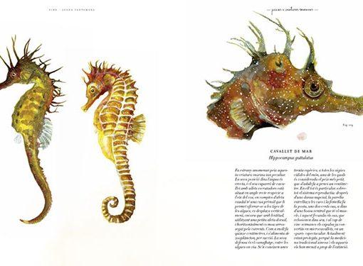 Caballito de Mar VIDA. Bestiario ilustrado por Joana Santamans