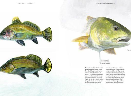 Peces VIDA. Bestiario ilustrado por Joana Santamans